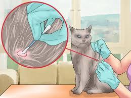 teek verwijderen kat